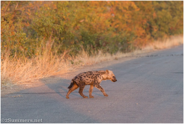 AMERICAN DREAM FORGOTTEN: DIASPORA KENYANS IN STYLE WITH THE HYENA IN FORKLORE STORIES